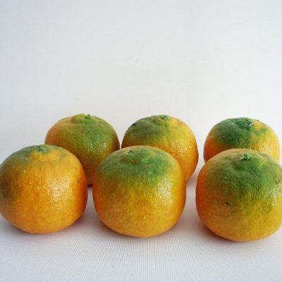 Decoratiefruit mandarijn oranje